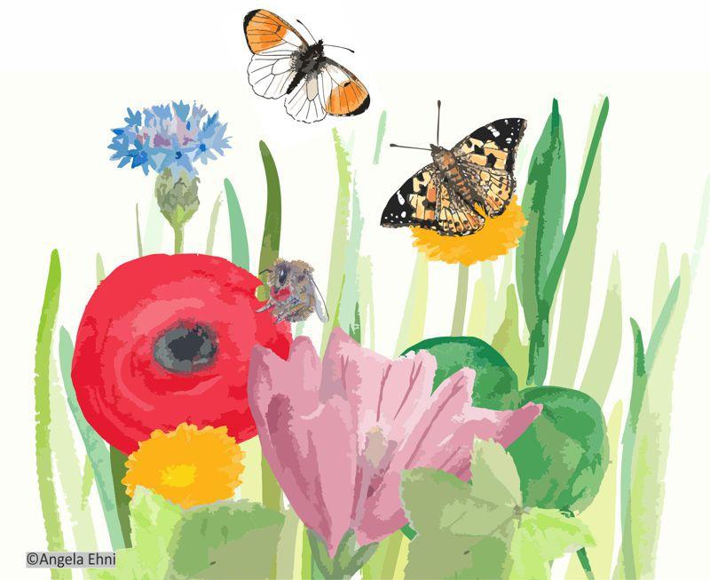 Samenmischung für mehr Insektenvielfalt; Aquarell