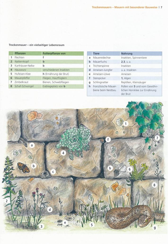 """""""Lebensraum Trockenmauer""""; aus: """"Handlungsleitfaden Trockenckenmauersanierung; Tusche und Buntstifte"""
